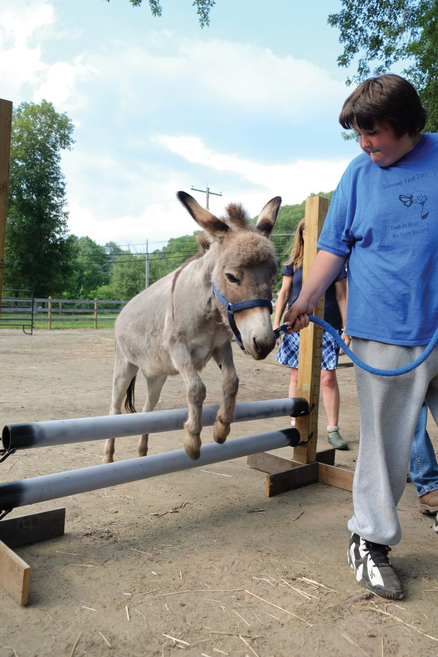 Donkeys as Therapy Animals
