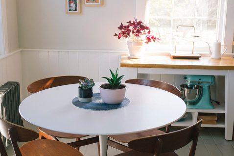 Indoor Succulents Care 101